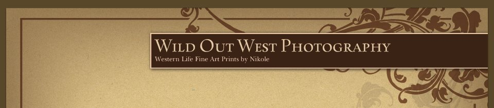 Wild Out West Photography - Western Life Fine Art Prints by Nikole